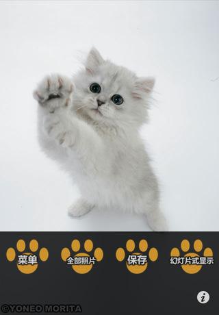这次我们专门收集了超级可爱的白色猫猫们(也包含灰色)的照片在家里